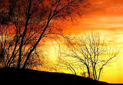 Sunset Photograph - Sunset And Cottonwoods by Floyd Bond