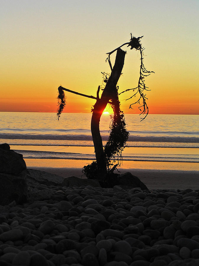 Sunset And Driftwood Photograph by Chuck Cannova