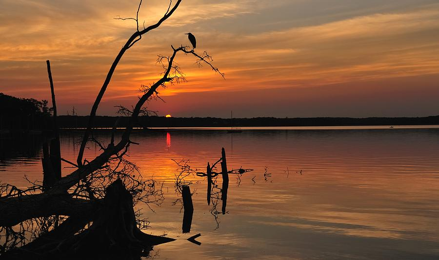 Sunset Photograph - Sunset And Heron by Angel Cher