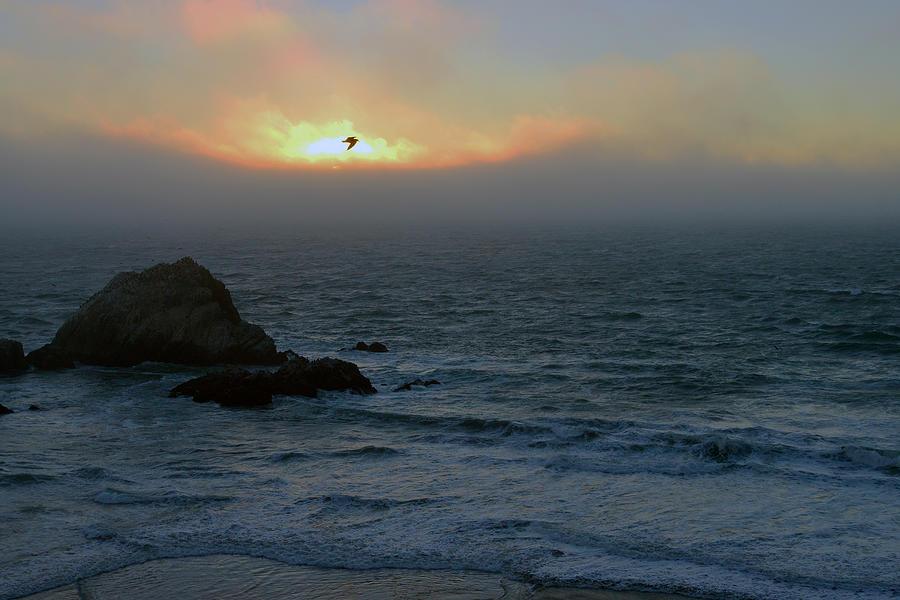 Sunset with the bird by Dragan Kudjerski