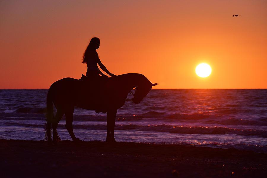 Horses Photograph - Sunset by Artur Baboev