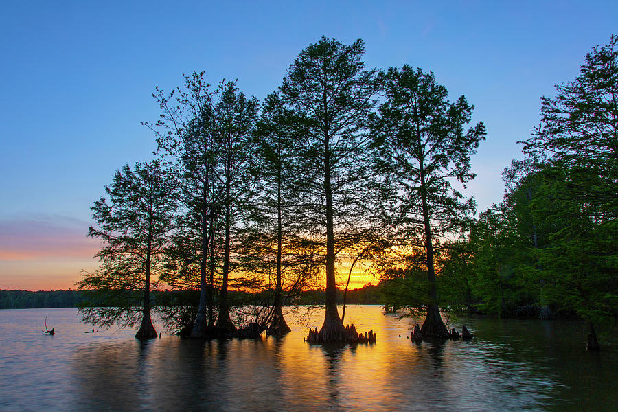 Sunset At Stumpy Lake Photograph