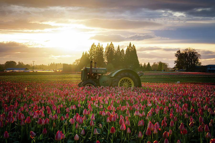 Sunset At The Tulip Farm Photograph