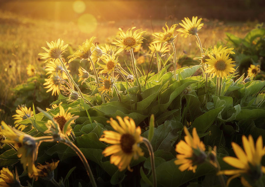 Sunset Balsam by Jon Ares