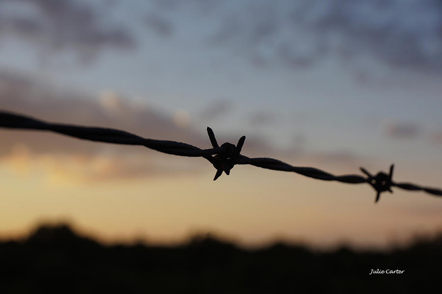 Sunset Barbwire by Julie Carter
