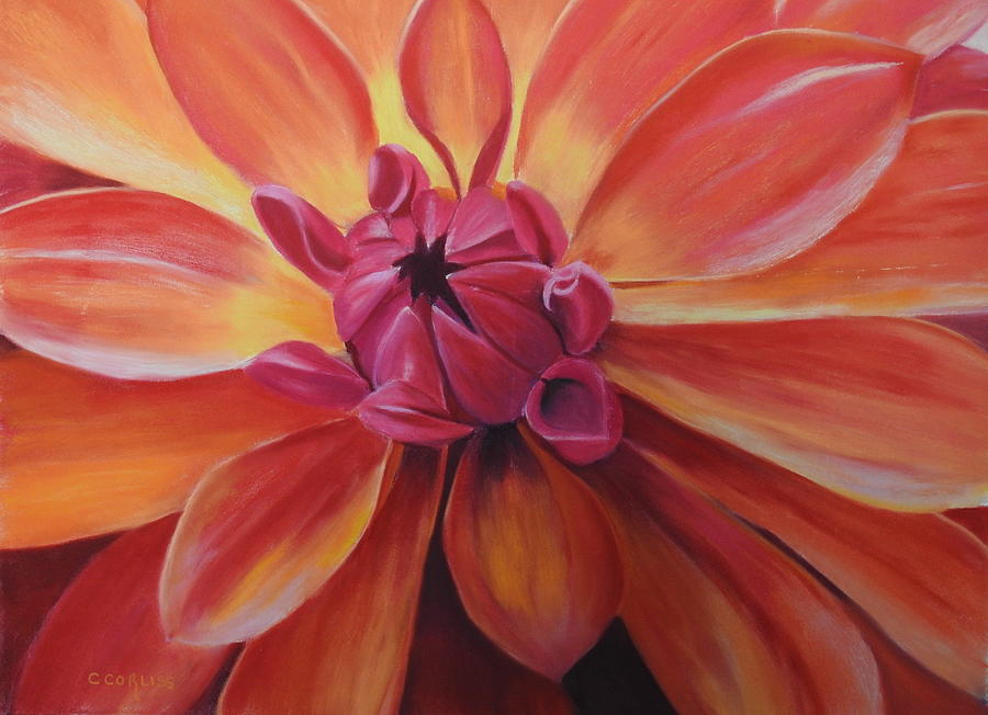 Sunset Dahlia by Carol Corliss
