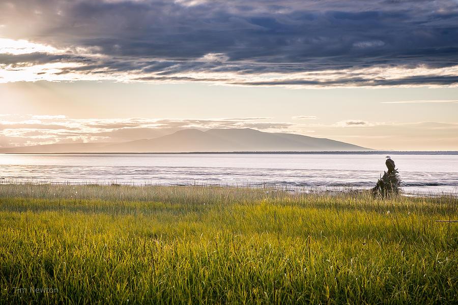 Eagle Photograph - Sunset Eagle by Tim Newton