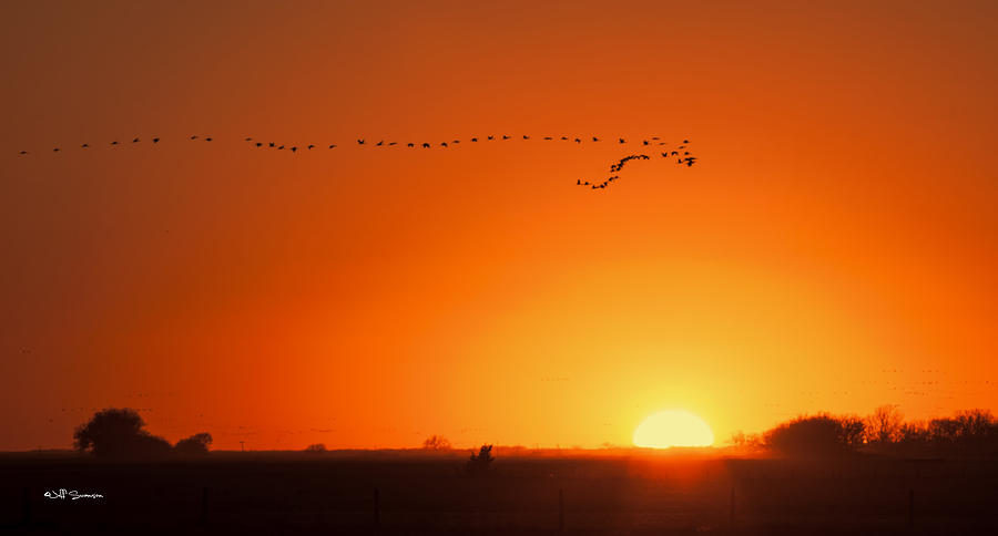 Sunset Photograph - Sunset Flight by Jeff Swanson