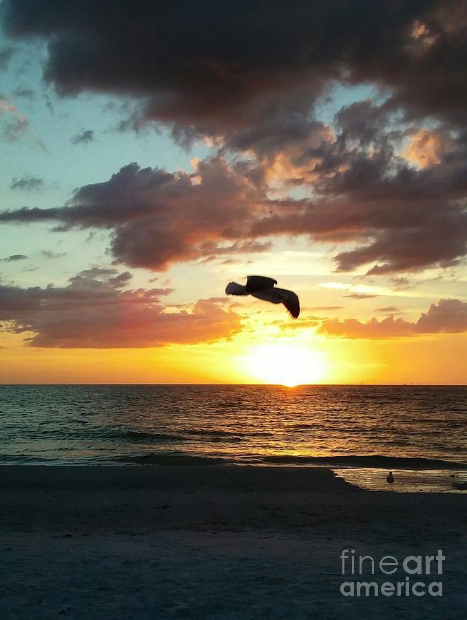 Sunset Flight by MYRTLE JOY