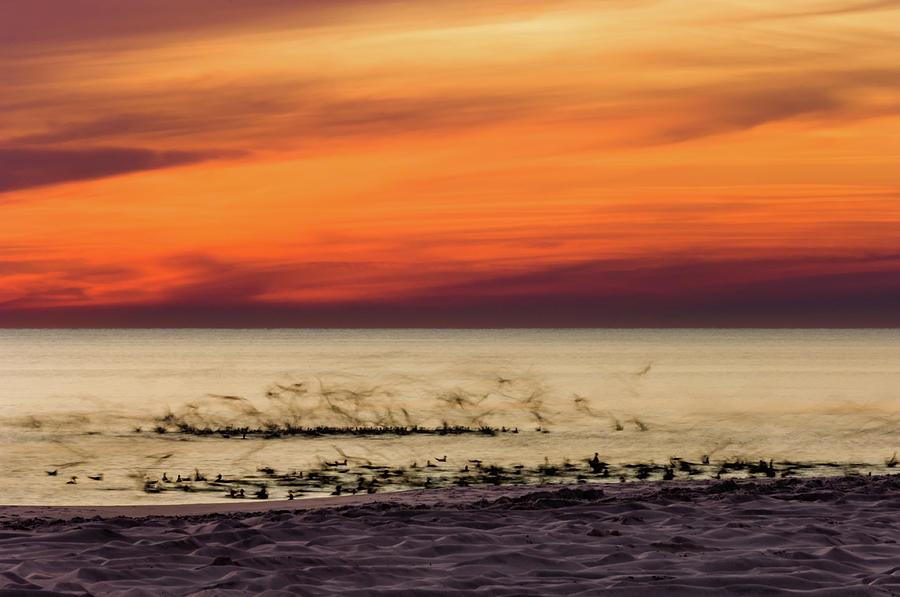 Sunset Flock by Kurt Lischka