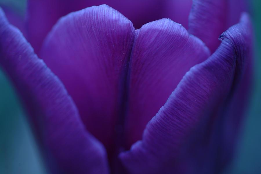 Flower Photograph - Sunset Flower by Michael McGowan