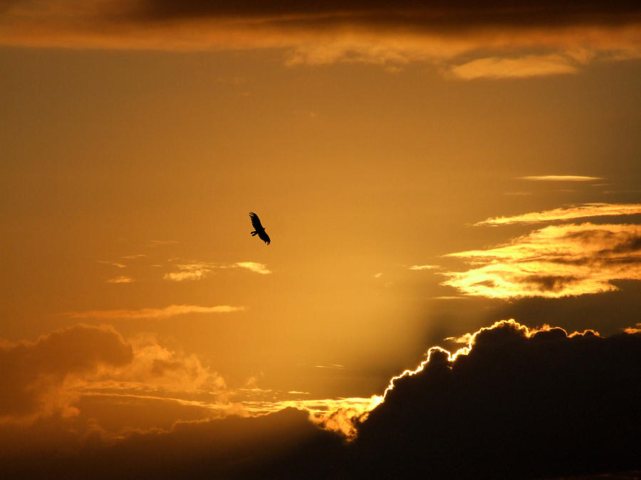 Sunset Glide Photograph by Mark Alan Perry