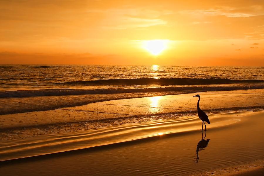 Florida Sunset Photograph - Sunset Gold by HH Photography of Florida