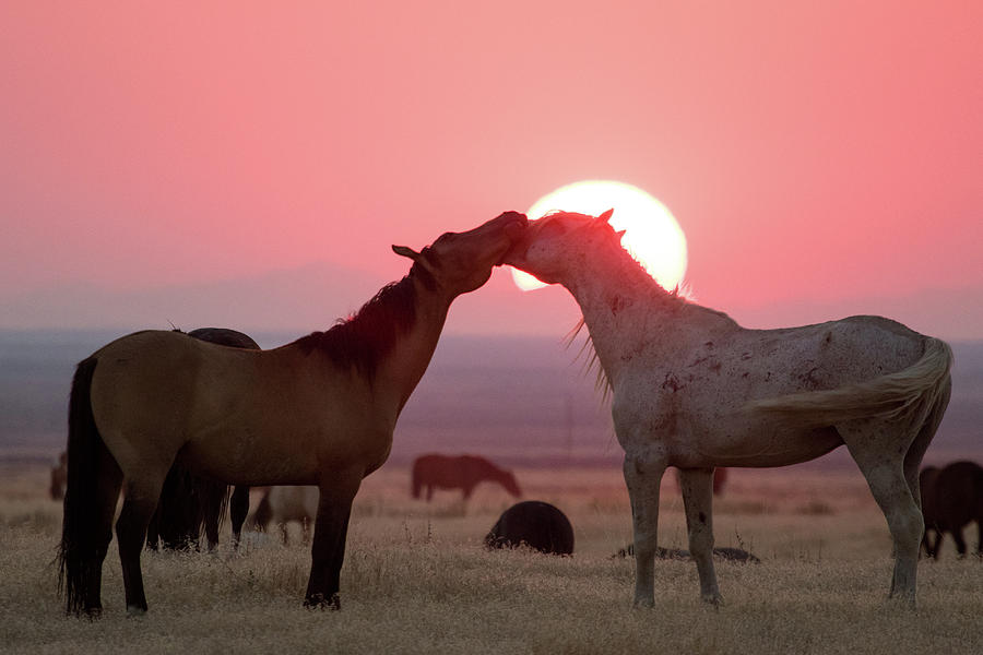Sunset Horses by Wesley Aston
