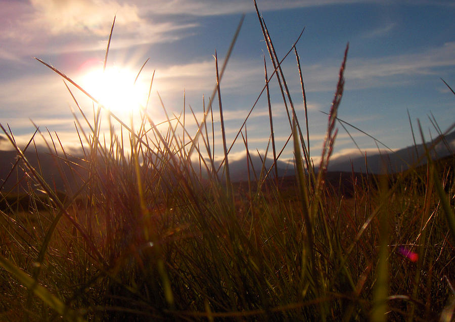 Sunset Photograph - Sunset In Grass by Sidsel Genee