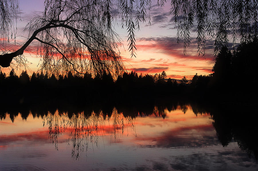 Lost Lagoon Photograph - Sunset In Lost Lagoon by Alexandre Michourovskii