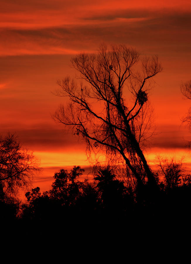 Sunset in Sacramento by Pat Moore