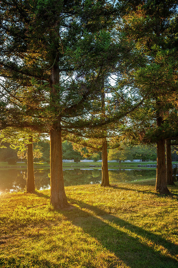 Sunset Photograph - Sunset In The Park by Lorrie Joaus