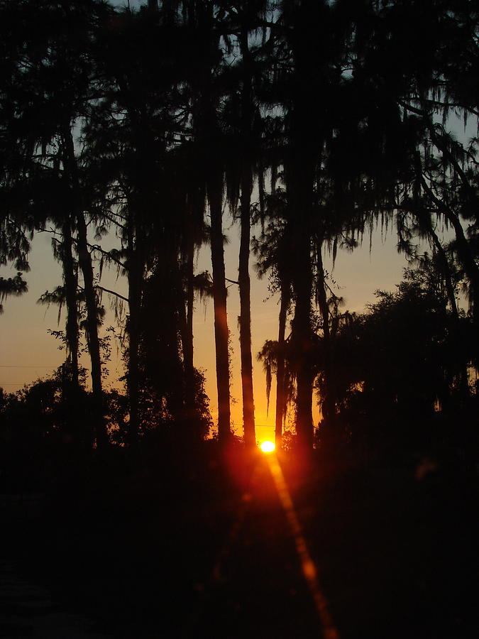 Sunset Photograph - Sunset In The Woods by Kimberly Camacho