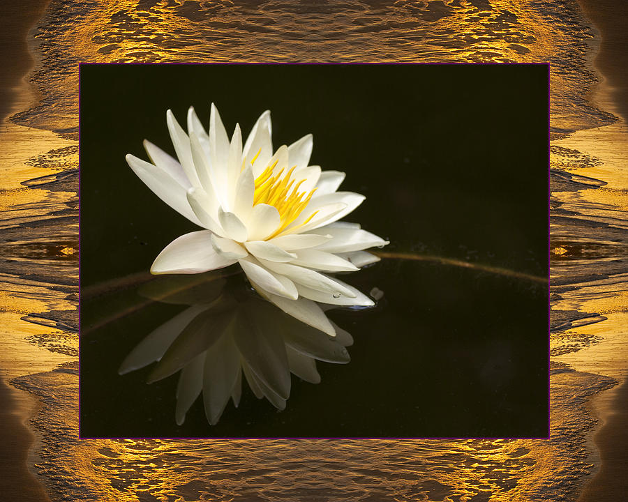 Nature Photos Photograph - Sunset Lily by Bell And Todd