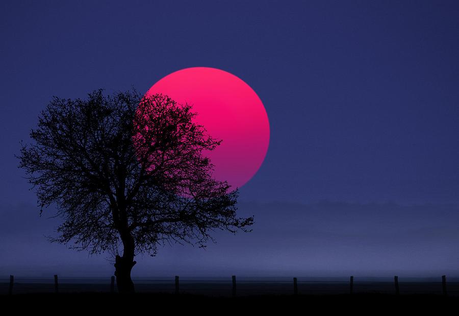 Silhouette Photograph - Sunset Magenta by Bess Hamiti