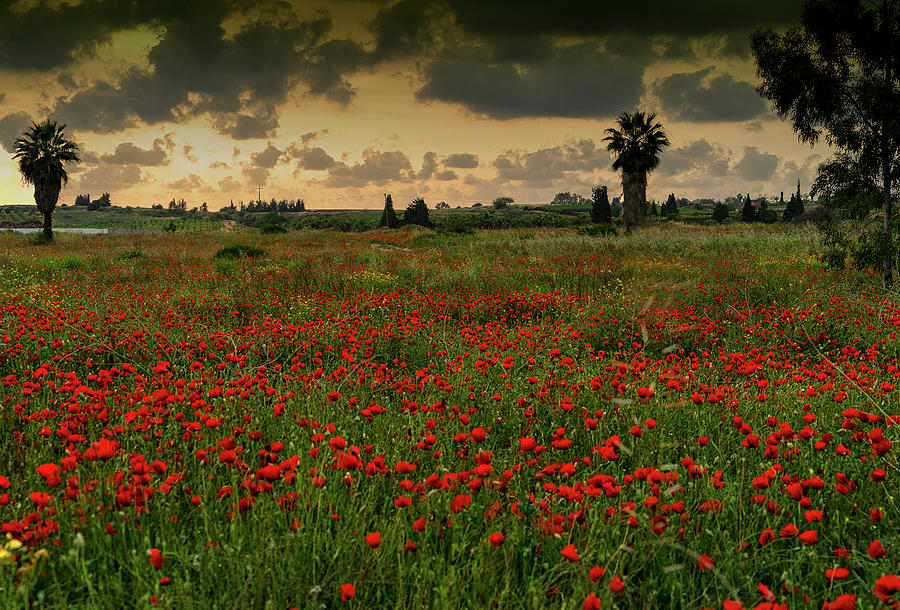 Sunset on a Poppies Field by Uri Baruch
