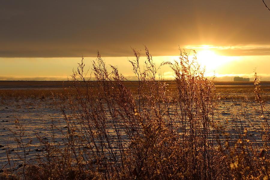 Sunset Photograph - Sunset On Field by Christy Patino