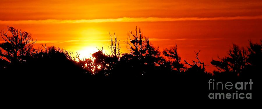 Sunset Photograph - Sunset Over Hatteras Maritime Forest by Jean Wright