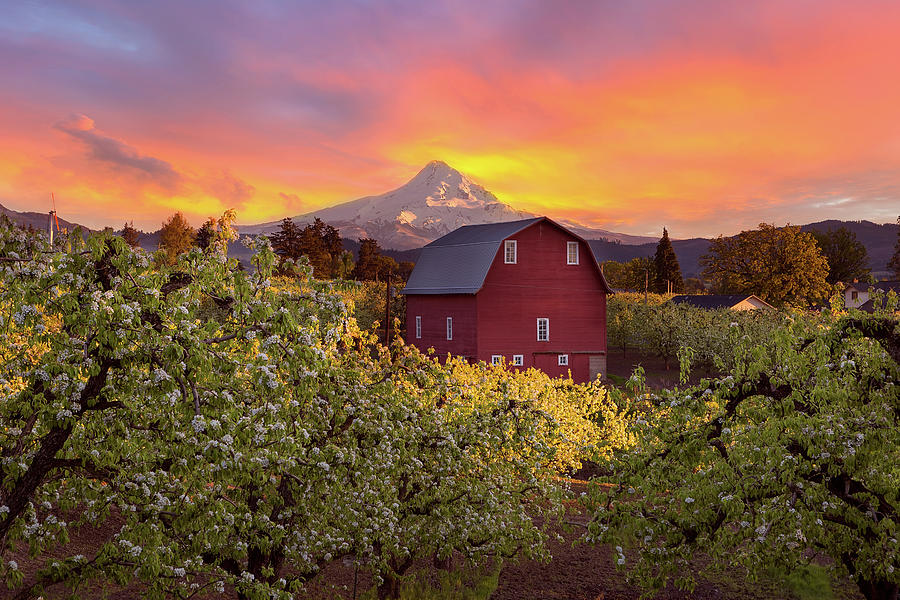Hood River Photograph - Sunset Over Mt Hood And Red Barn by David Gn