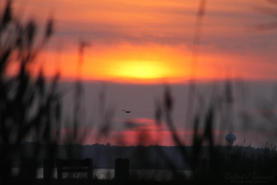 Sun Photograph - Sunset Over The Reeds by Robert Banach