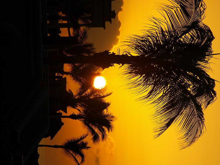 Landscape Photograph - Sunset Palm by Randall Slinkard