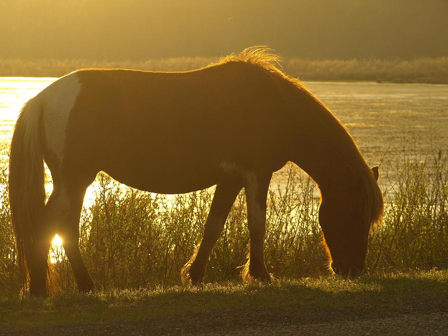 Assateague Painting - Sunset Pony by Kim