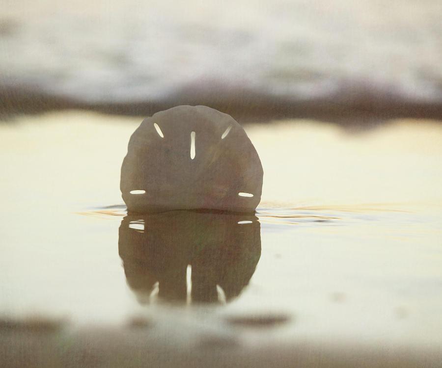 Sunset Sand Dollar Photograph