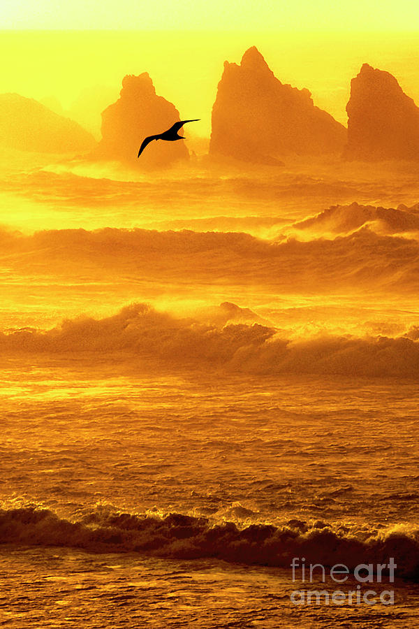 sunset sea stacks sea gull bandon oregon by Dave Welling