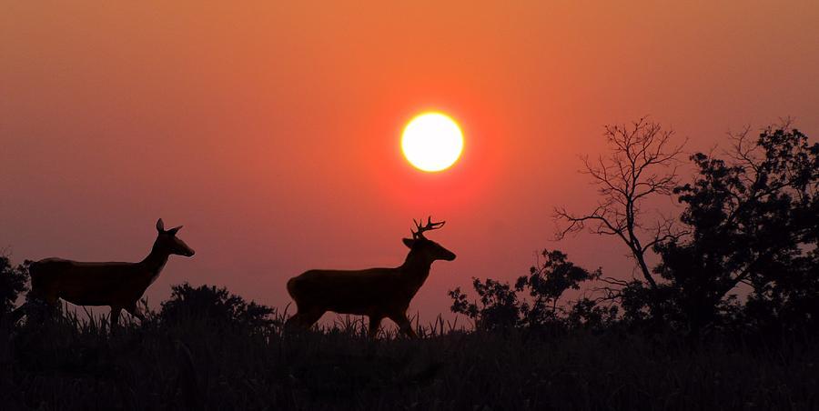 Sunset Photograph - Sunset Silhouette by David Dehner