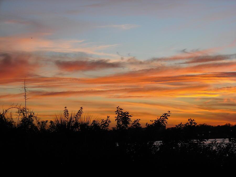 Sun Photograph - Sunset Silhouette by Mandy Shupp