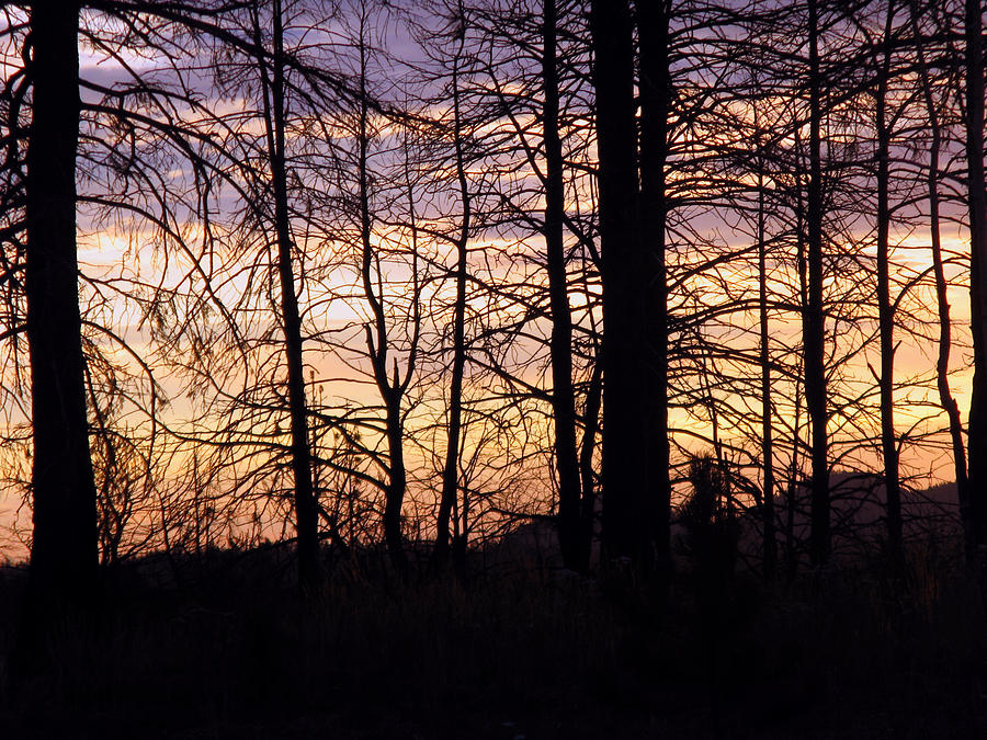 Sunset Silhouette Photograph - Sunset Silhouette by Michael Seraphin