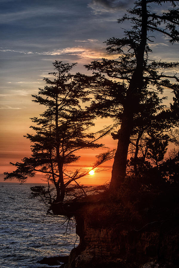 Sunset through the Trees by John Kiss