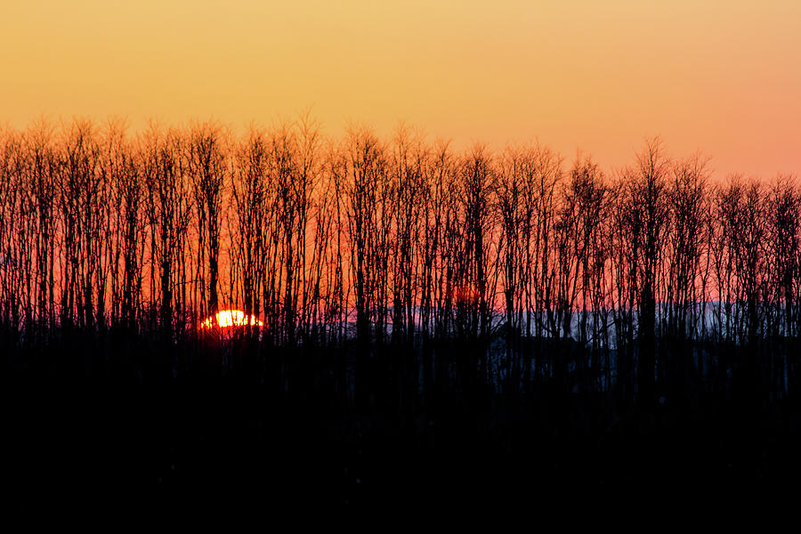 Sunset Through the Trees by Kenneth F Konjevich