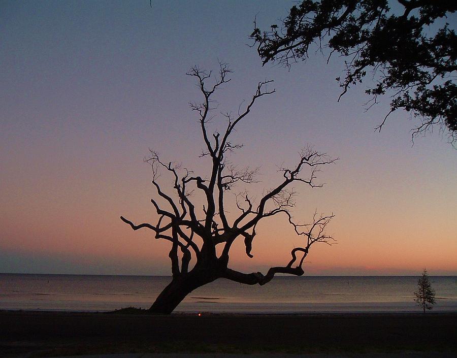 Sunset Photograph - Sunset Tree by Amanda Shelburne