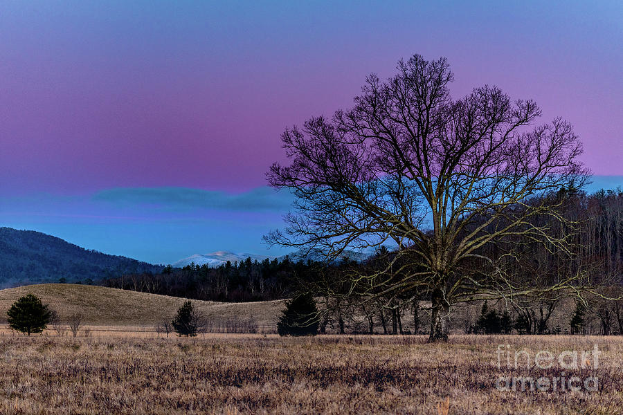 Tree Photograph - Sunset Tree by Darwin White