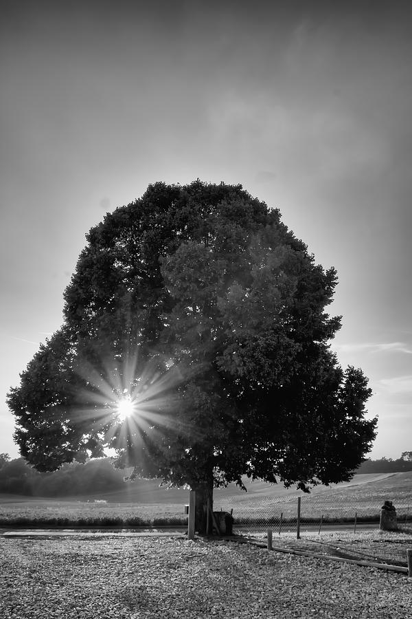 Sunset Photograph - Sunset Tree In Mono by Georgia Fowler