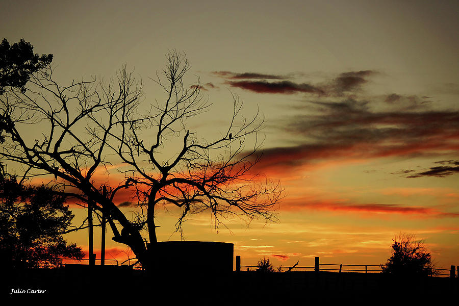 Sunset tree  by Julie Carter