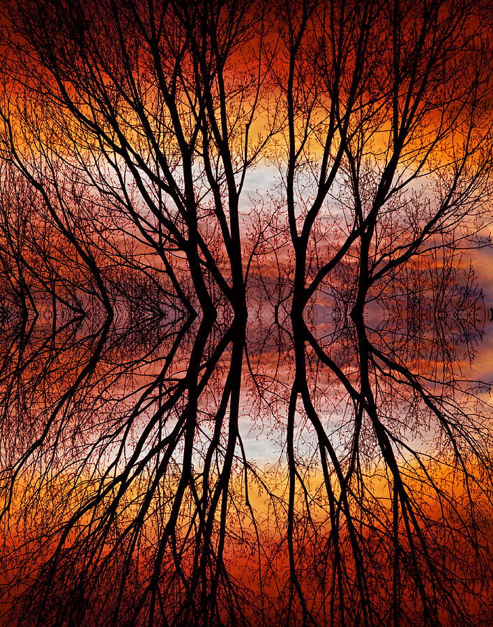 Abstracts Photograph - Sunset Tree Silhouette Abstract 2 by James BO  Insogna