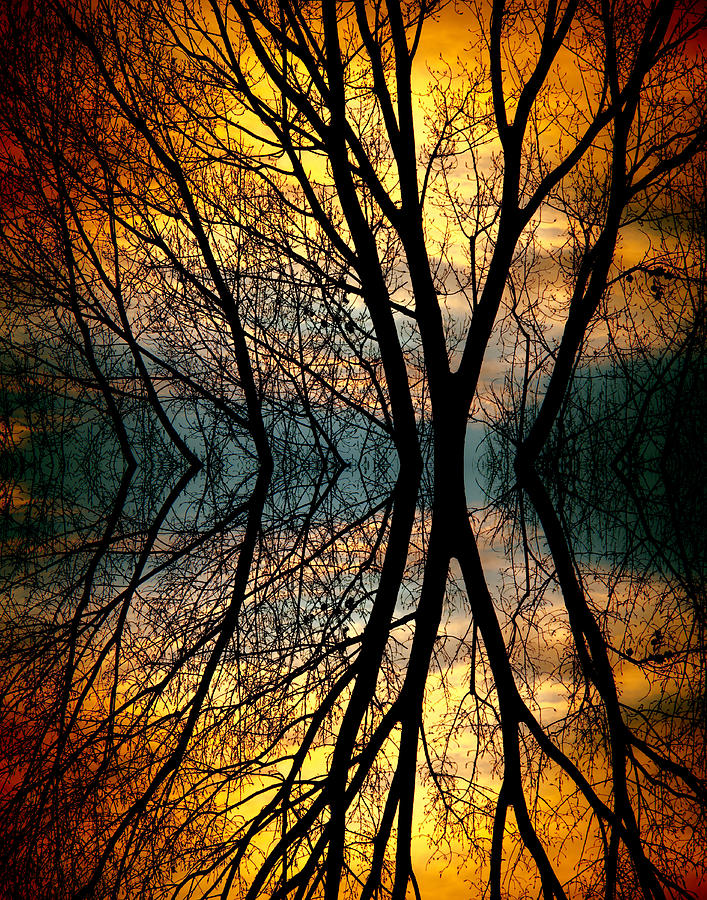 Abstract Photograph - Sunset Tree Silhouette Abstract 3 by James BO  Insogna