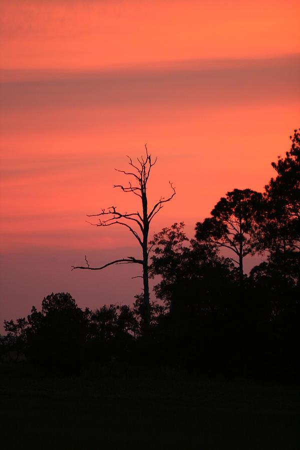Sunset Photograph - Sunset by Walt Reece