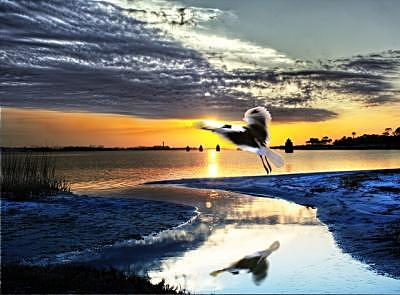Landscape Photograph - Sunset Wings by Eszra Tanner