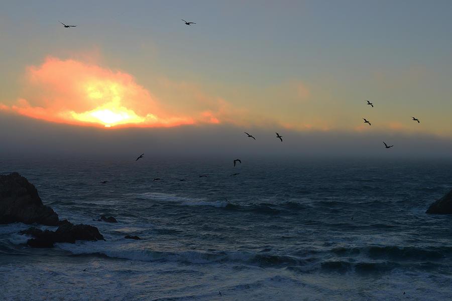 Sunset with the birds by Dragan Kudjerski