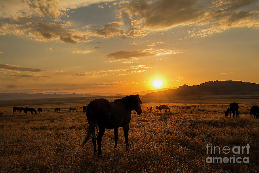 Nikon Photograph - Sunset With The Mustangs  by Nicole Markmann Nelson