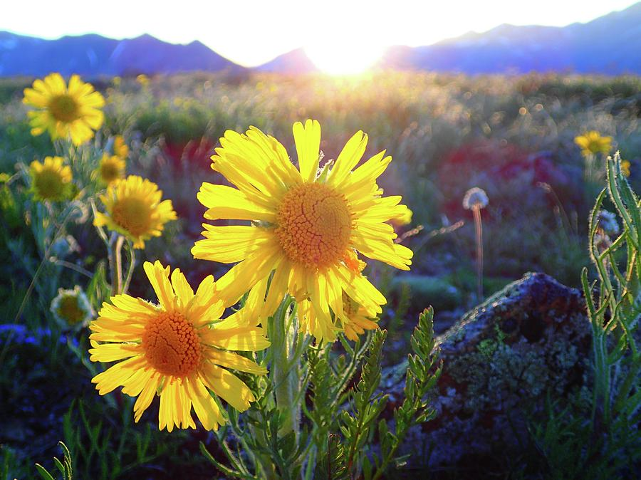 Buena Photograph - Sunsets And Sunflowers In Buena Vista by Lora Louise